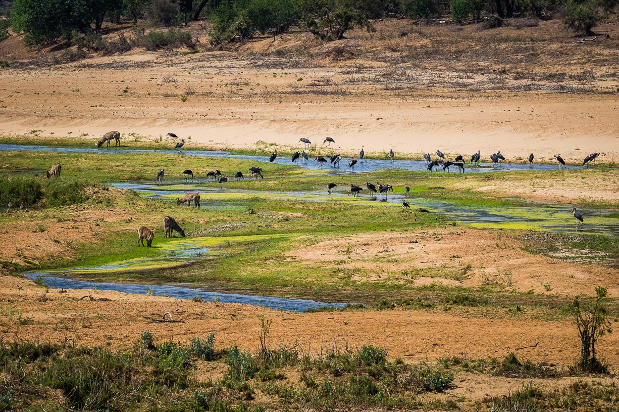 Uitzicht op de Letaba rivier vanuit Letaba Camp.