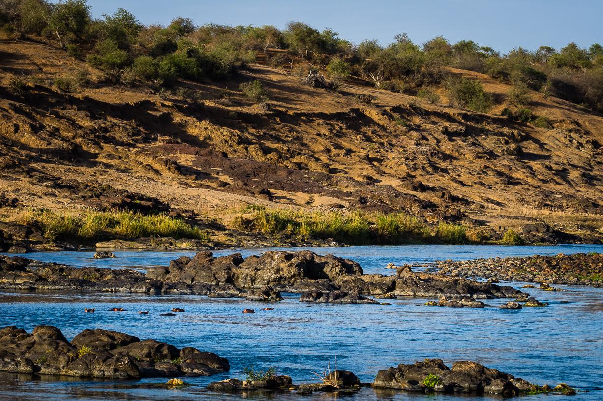 Hippo's in de Olifantsrivier